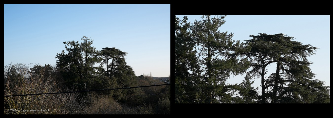 detail-arbre-fuji-xt1-graphite-2